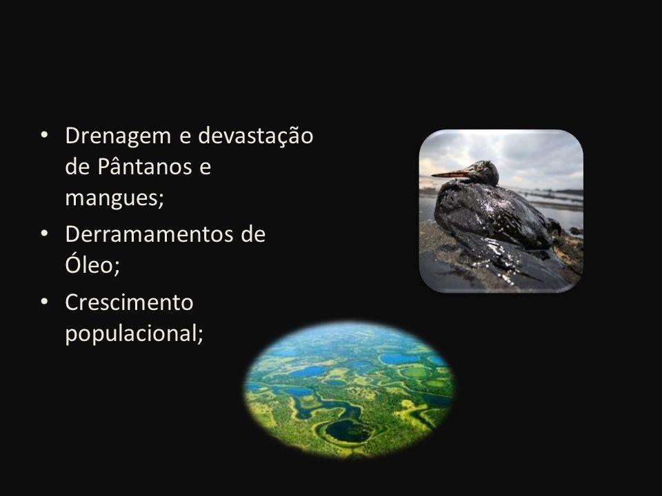 Drenagem e devastação de Pântanos e mangues;