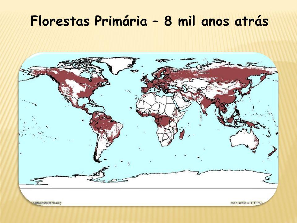 Florestas Primária – 8 mil anos atrás