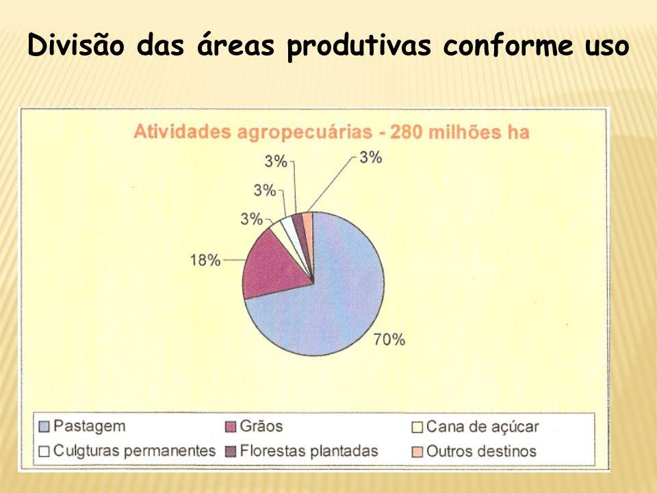 Divisão das áreas produtivas conforme uso