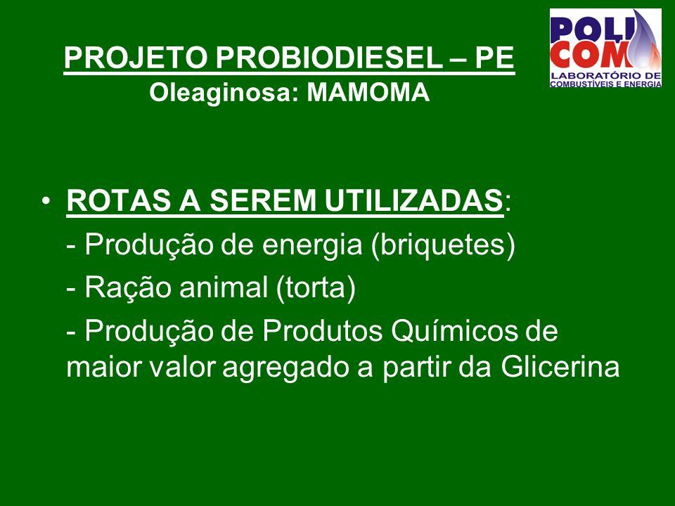 PROJETO PROBIODIESEL – PE Oleaginosa: MAMOMA