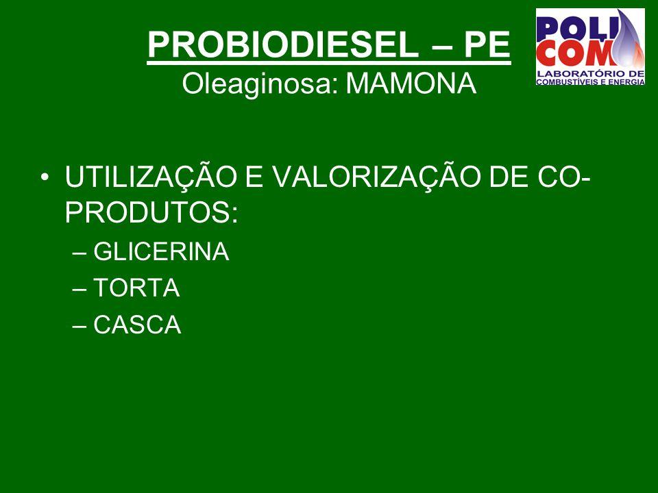 PROBIODIESEL – PE Oleaginosa: MAMONA