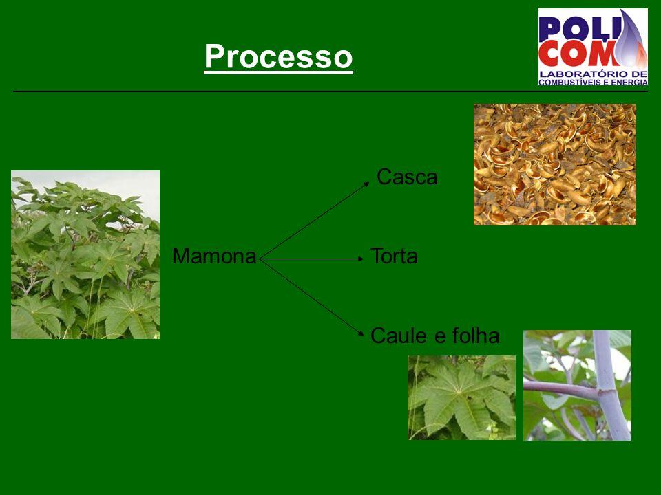 Processo Casca Mamona Torta Caule e folha