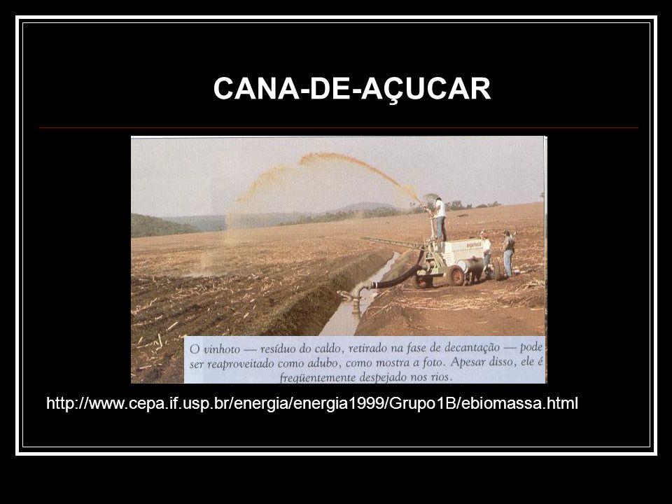 CANA-DE-AÇUCAR http://www.cepa.if.usp.br/energia/energia1999/Grupo1B/ebiomassa.html