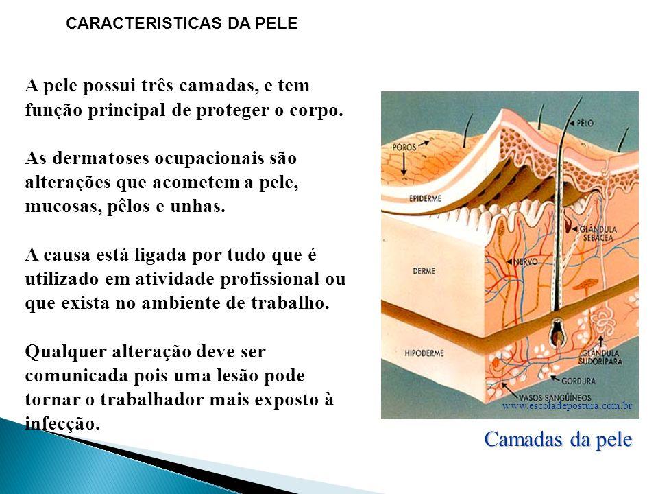 CARACTERISTICAS DA PELE