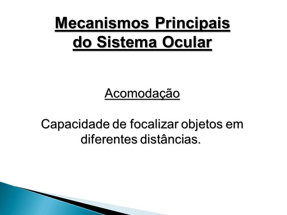 Mecanismos Principais
