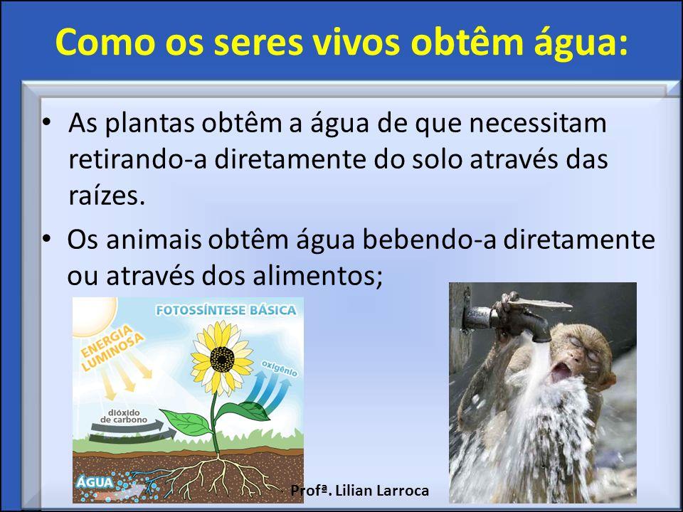 Como os seres vivos obtêm água: