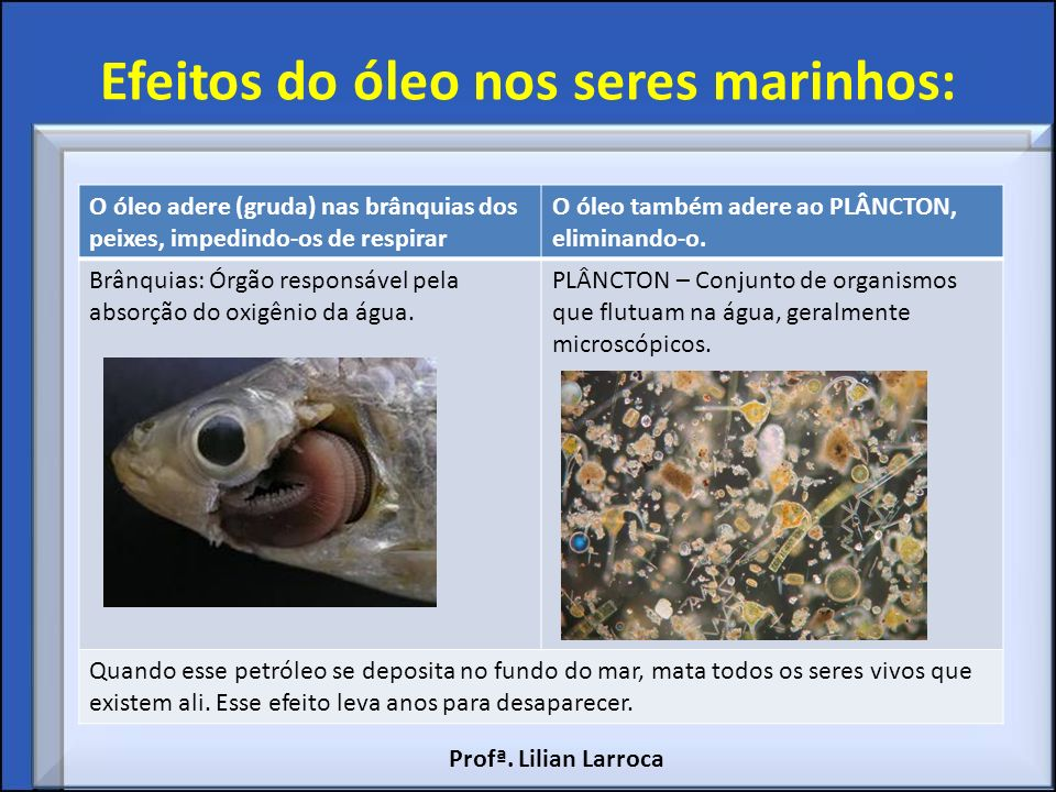 Efeitos do óleo nos seres marinhos: