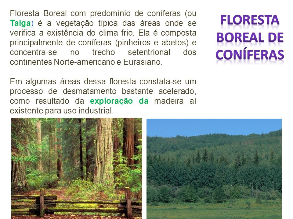 Floresta Boreal de Coníferas