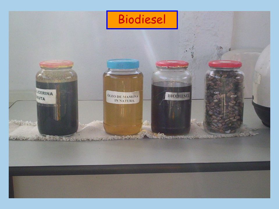 Biodiesel Bagaço Álcool Carvão vegetal Biodigestor