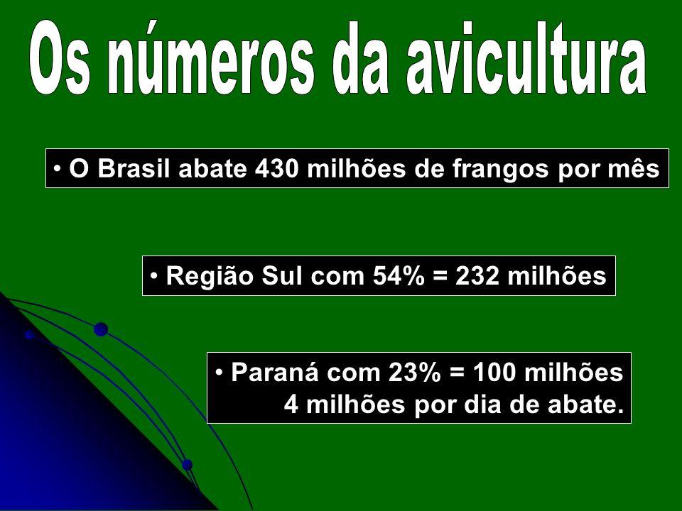 Os números da avicultura