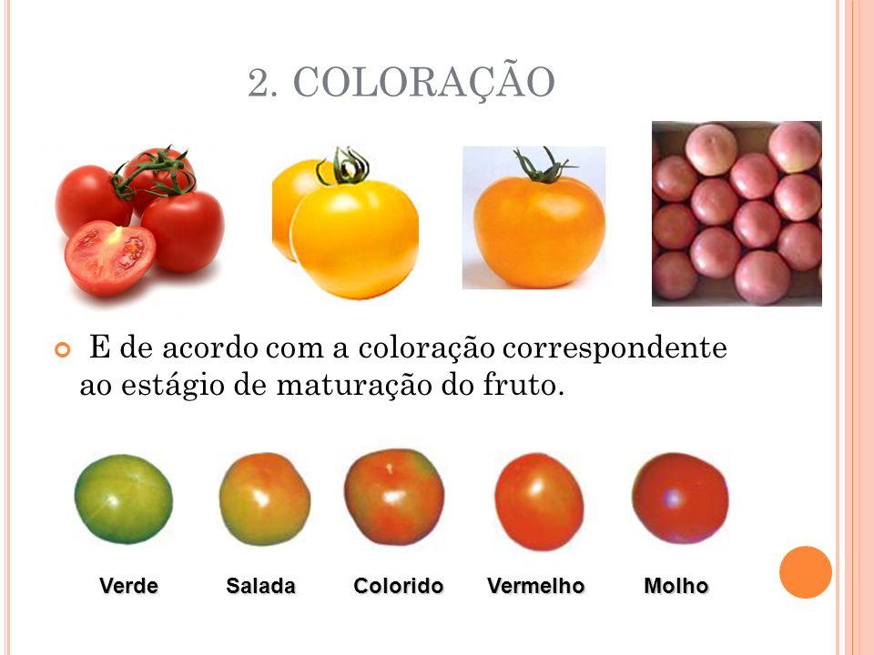 2. COLORAÇÃO E de acordo com a coloração correspondente ao estágio de maturação do fruto.