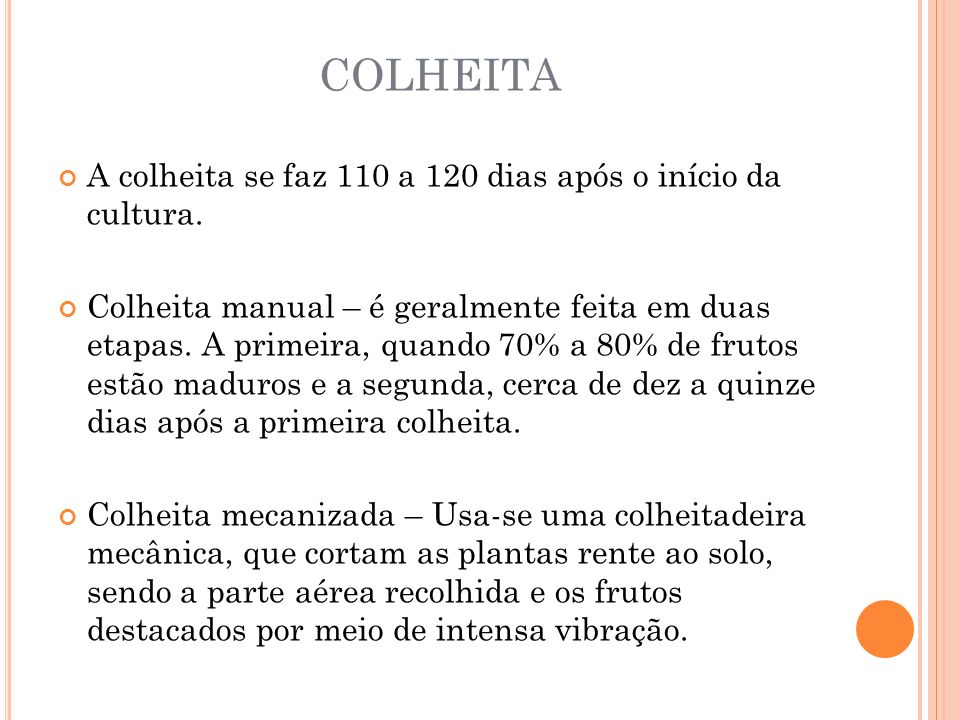 COLHEITA A colheita se faz 110 a 120 dias após o início da cultura.