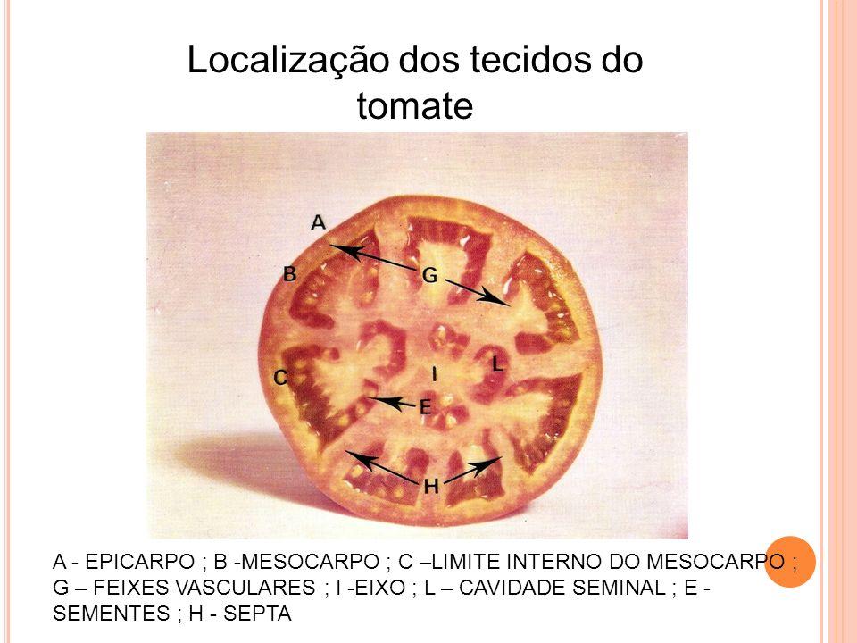 Localização dos tecidos do tomate