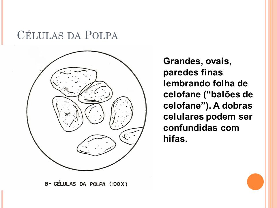 Células da Polpa