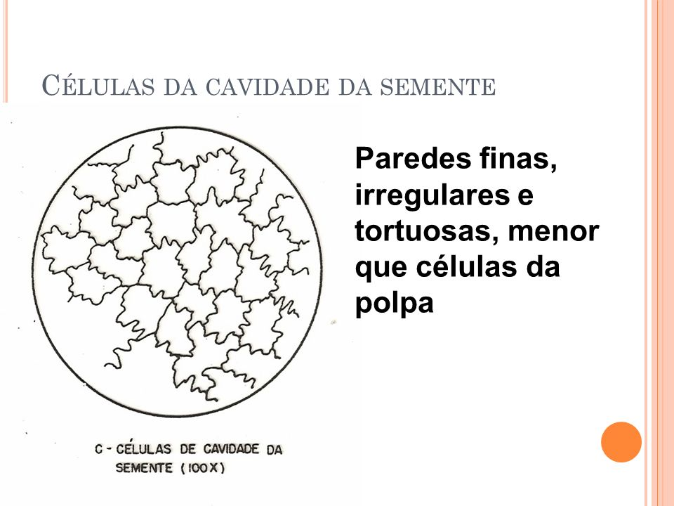 Células da cavidade da semente