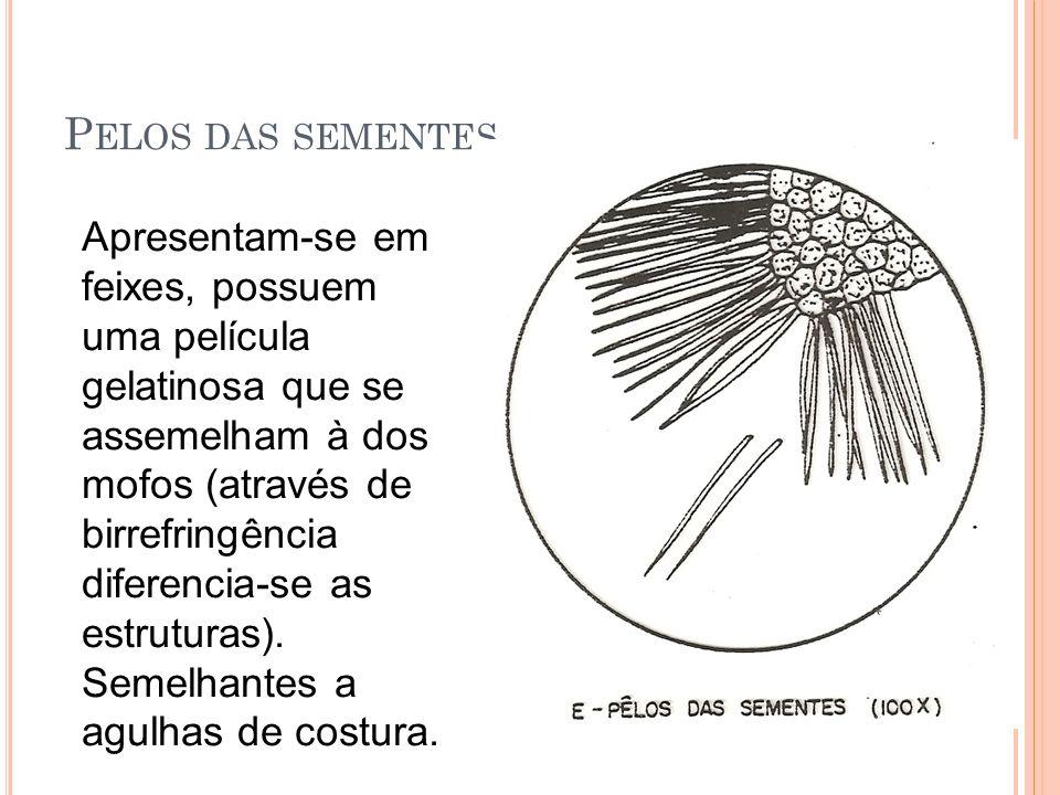 Pelos das sementes