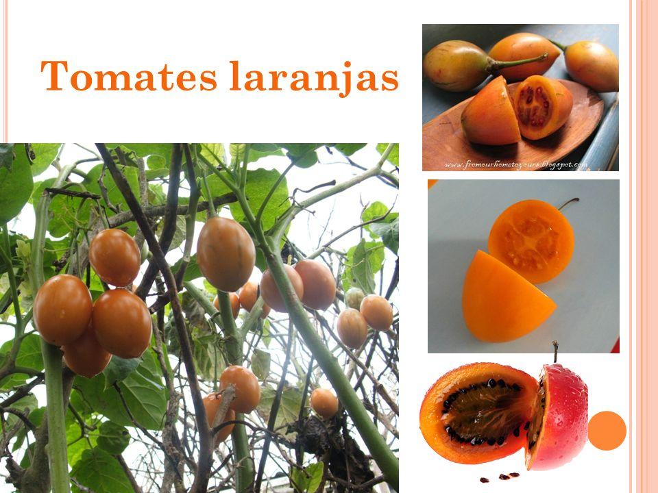 Tomates laranjas