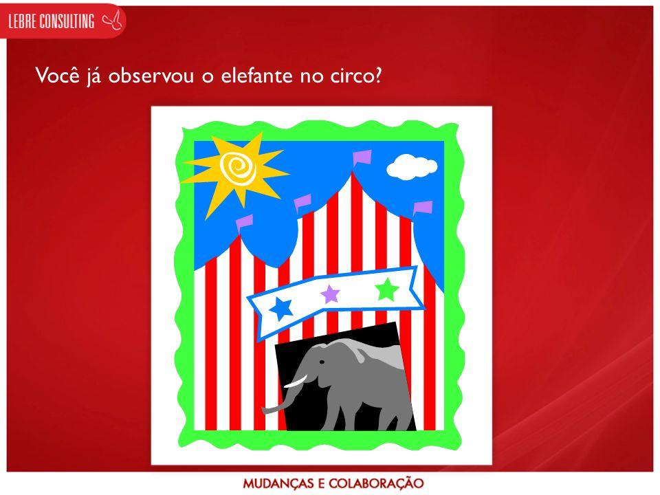 Você já observou o elefante no circo