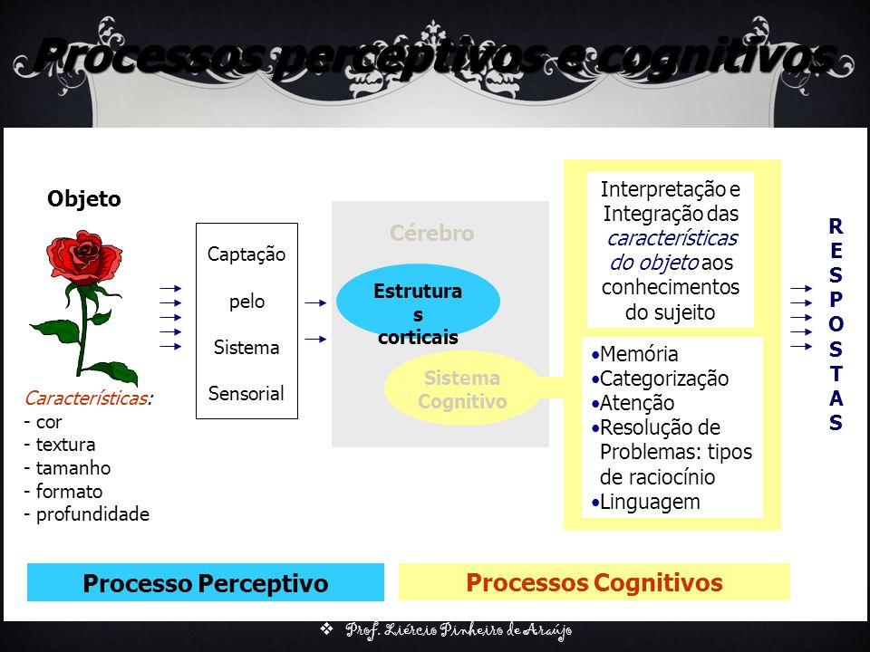 Processos perceptivos e cognitivos