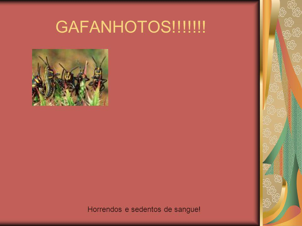 GAFANHOTOS!!!!!!! Horrendos e sedentos de sangue!
