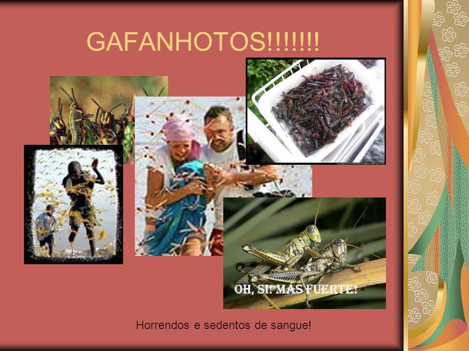 GAFANHOTOS!!!!!!! Oh, si! Más fuerte! Horrendos e sedentos de sangue!