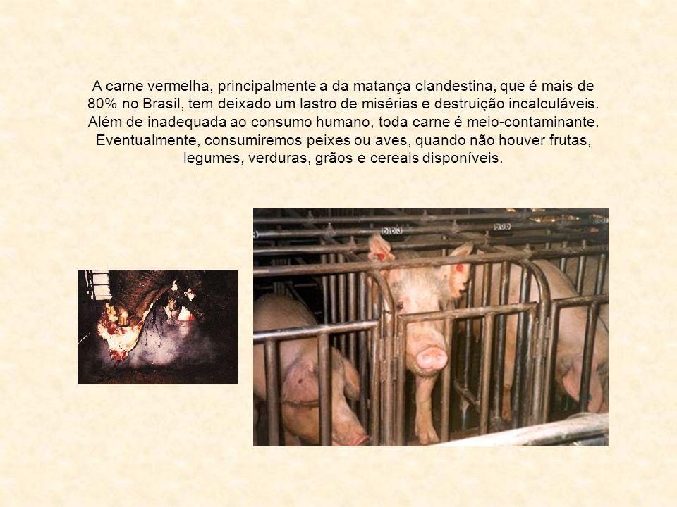Além de inadequada ao consumo humano, toda carne é meio-contaminante.