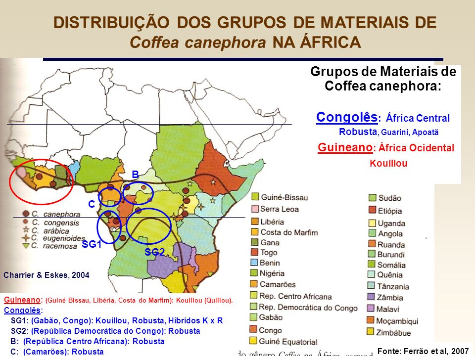 DISTRIBUIÇÃO DOS GRUPOS DE MATERIAIS DE Coffea canephora NA ÁFRICA