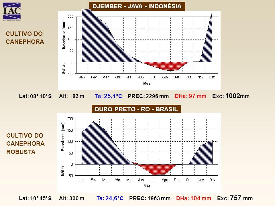 DJEMBER - JAVA - INDONÉSIA