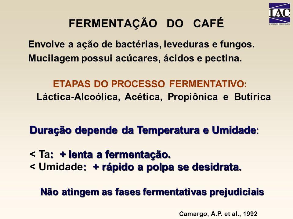 FERMENTAÇÃO DO CAFÉ Duração depende da Temperatura e Umidade: