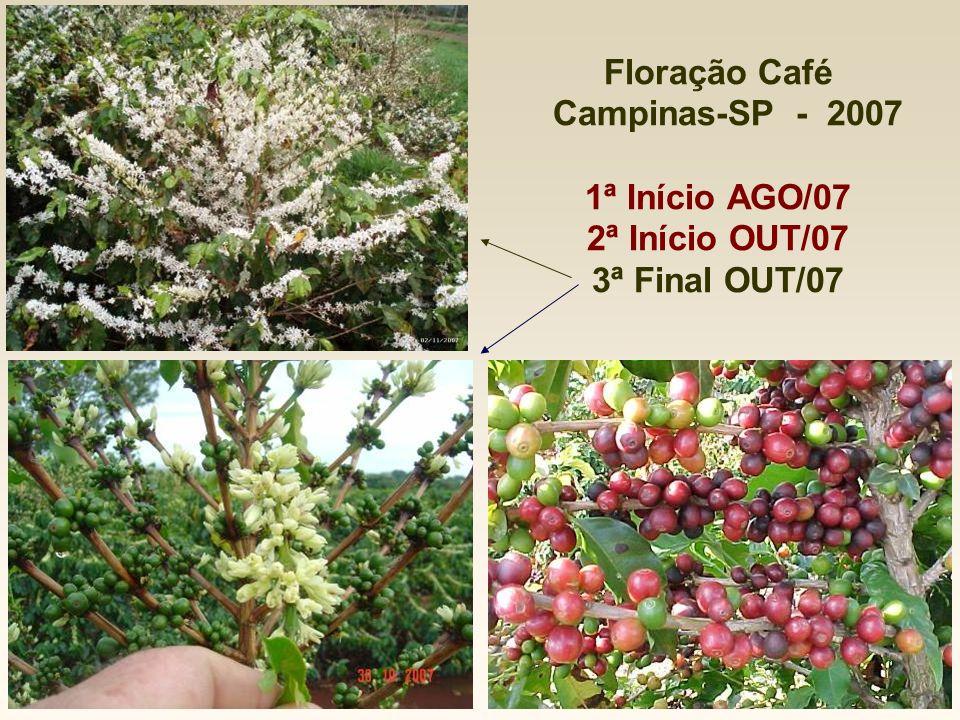 Floração Café Campinas-SP - 2007 1ª Início AGO/07 2ª Início OUT/07 3ª Final OUT/07
