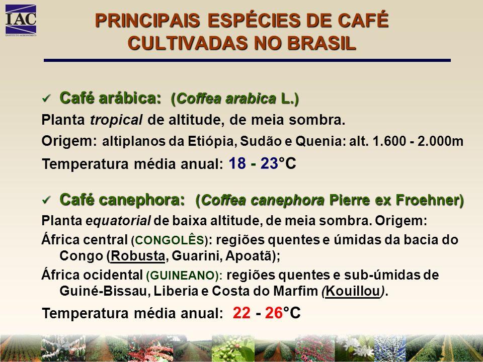 PRINCIPAIS ESPÉCIES DE CAFÉ CULTIVADAS NO BRASIL