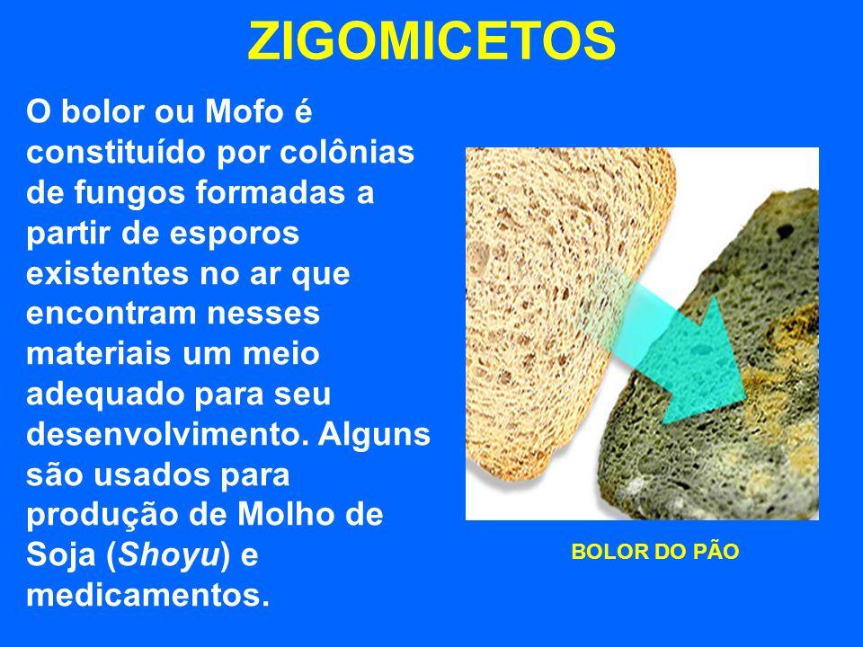 ZIGOMICETOS