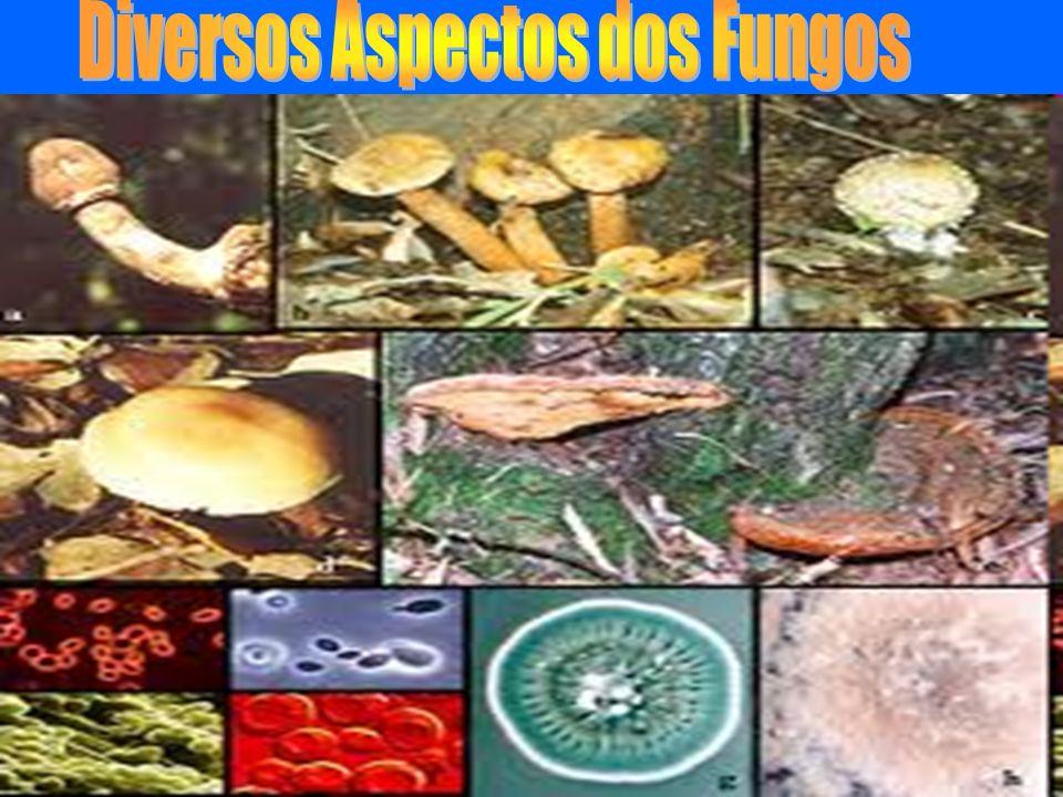 Diversos Aspectos dos Fungos