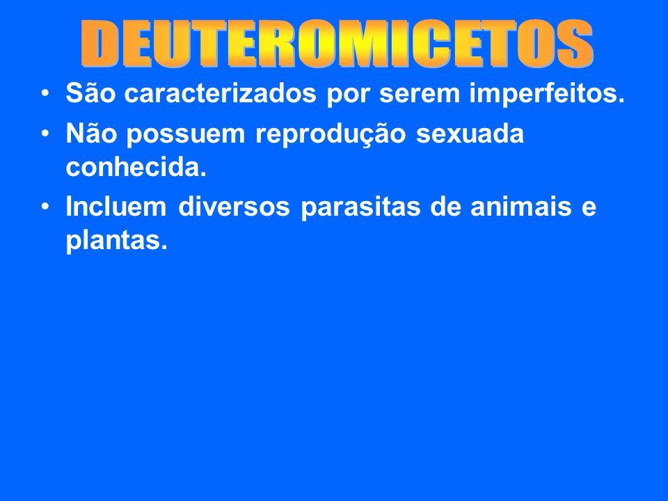 DEUTEROMICETOS São caracterizados por serem imperfeitos.