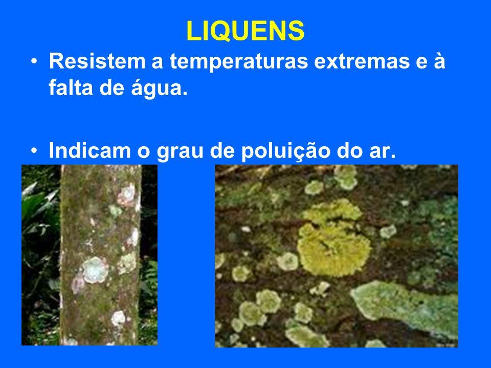 LIQUENS Resistem a temperaturas extremas e à falta de água.