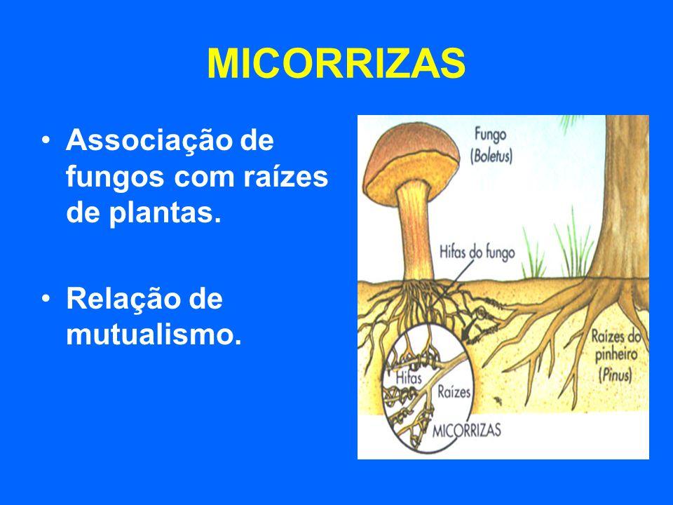 MICORRIZAS Associação de fungos com raízes de plantas.