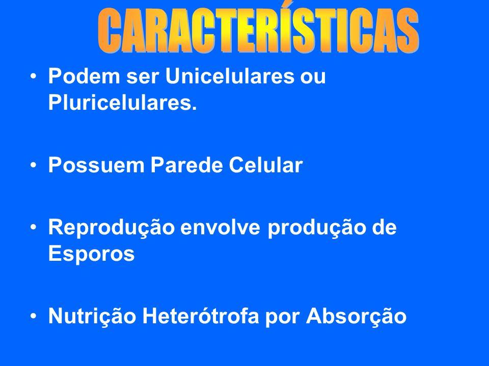 CARACTERÍSTICAS Podem ser Unicelulares ou Pluricelulares.