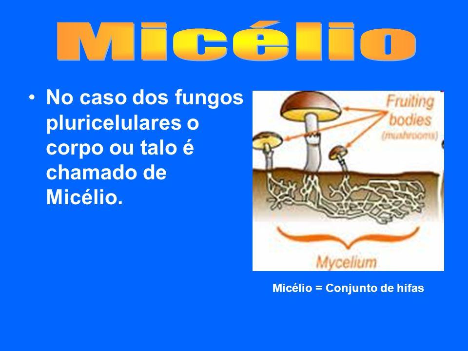 Micélio = Conjunto de hifas