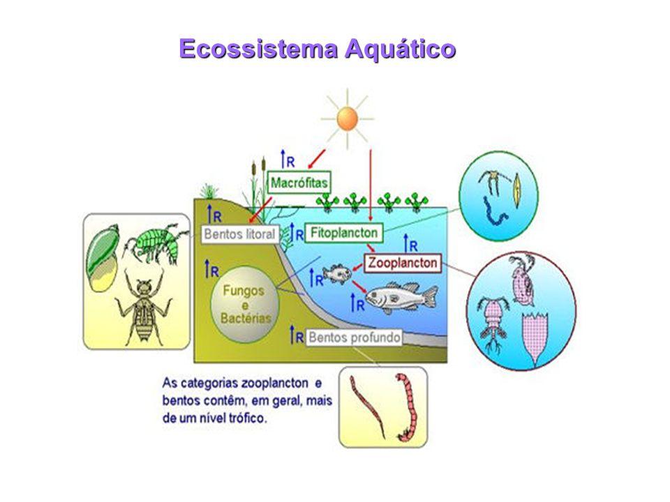 Ecossistema Aquático
