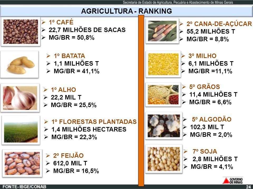 AGRICULTURA - RANKING 1º CAFÉ 22,7 MILHÕES DE SACAS MG/BR = 50,8%