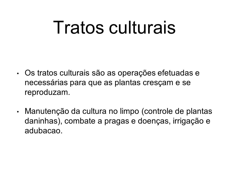 Tratos culturais Os tratos culturais são as operações efetuadas e necessárias para que as plantas cresçam e se reproduzam.