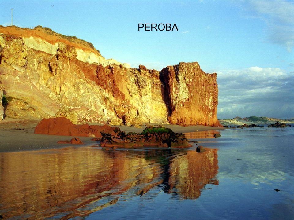 PEROBA Peroba