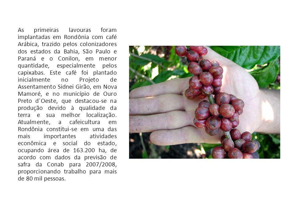 As primeiras lavouras foram implantadas em Rondônia com café Arábica, trazido pelos colonizadores dos estados da Bahia, São Paulo e Paraná e o Conilon, em menor quantidade, especialmente pelos capixabas.