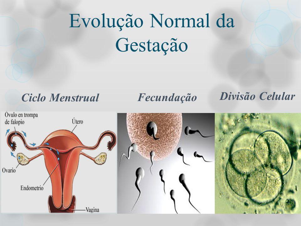 Evolução Normal da Gestação
