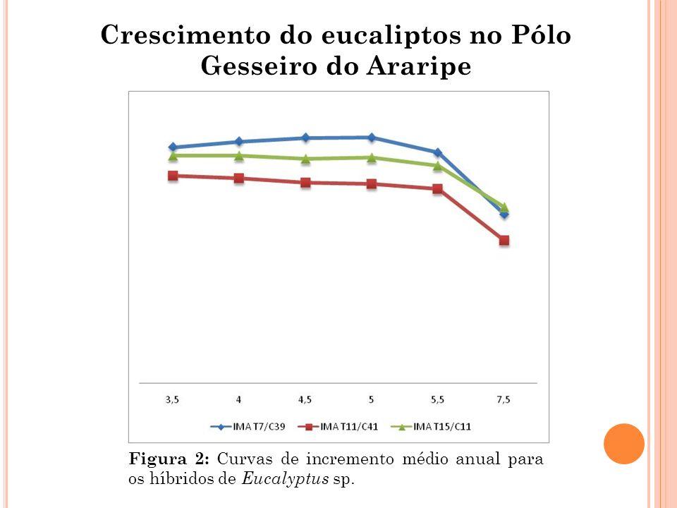 Crescimento do eucaliptos no Pólo Gesseiro do Araripe