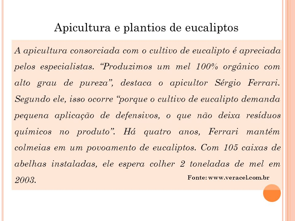Apicultura e plantios de eucaliptos