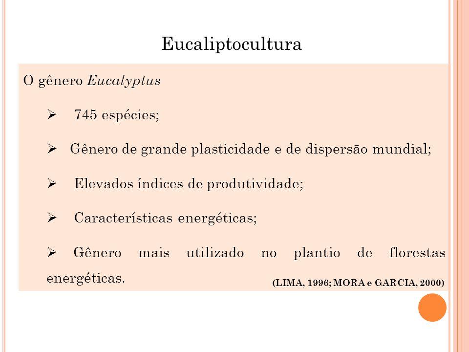 Eucaliptocultura O gênero Eucalyptus 745 espécies;