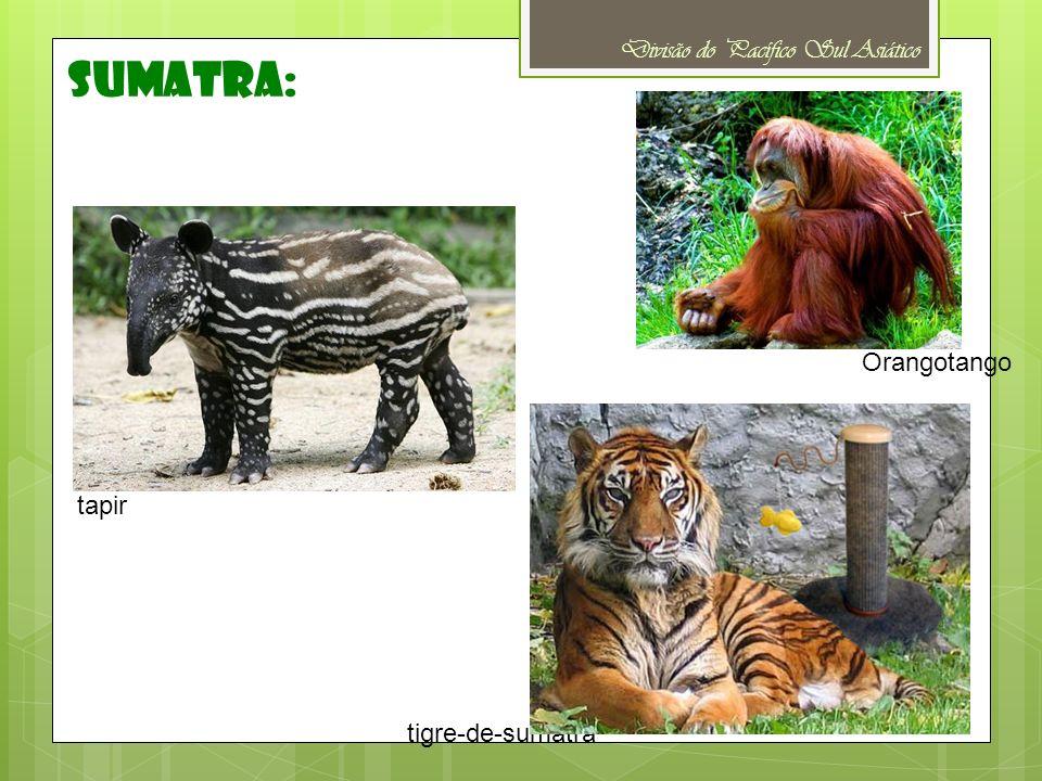 sumatra: Divisão do Pacífico Sul Asiático Orangotango tapir