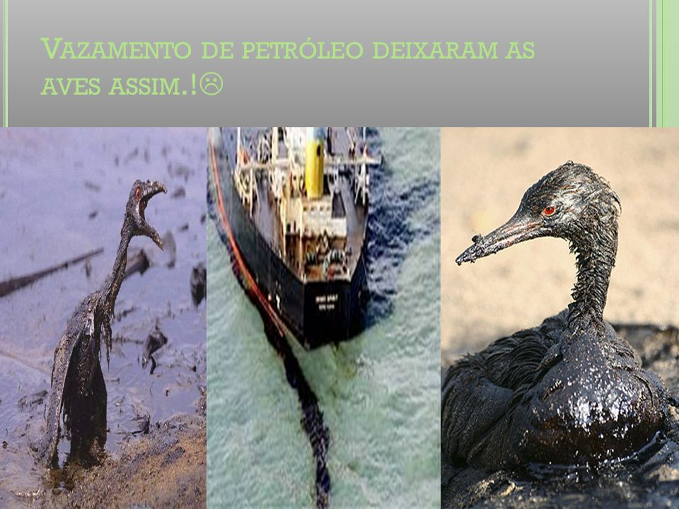 Vazamento de petróleo deixaram as aves assim.!