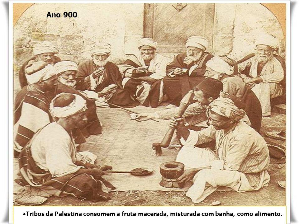 Tribos da Palestina consomem a fruta macerada, misturada com banha, como alimento.